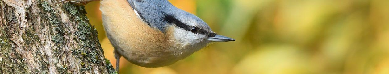 Ochrana ptáků