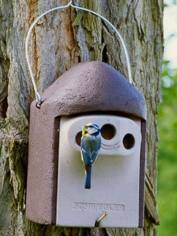 Schwegler nesting box