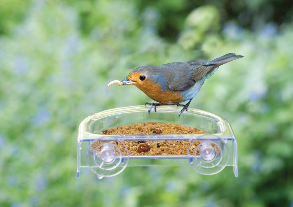 Bird table on window pane