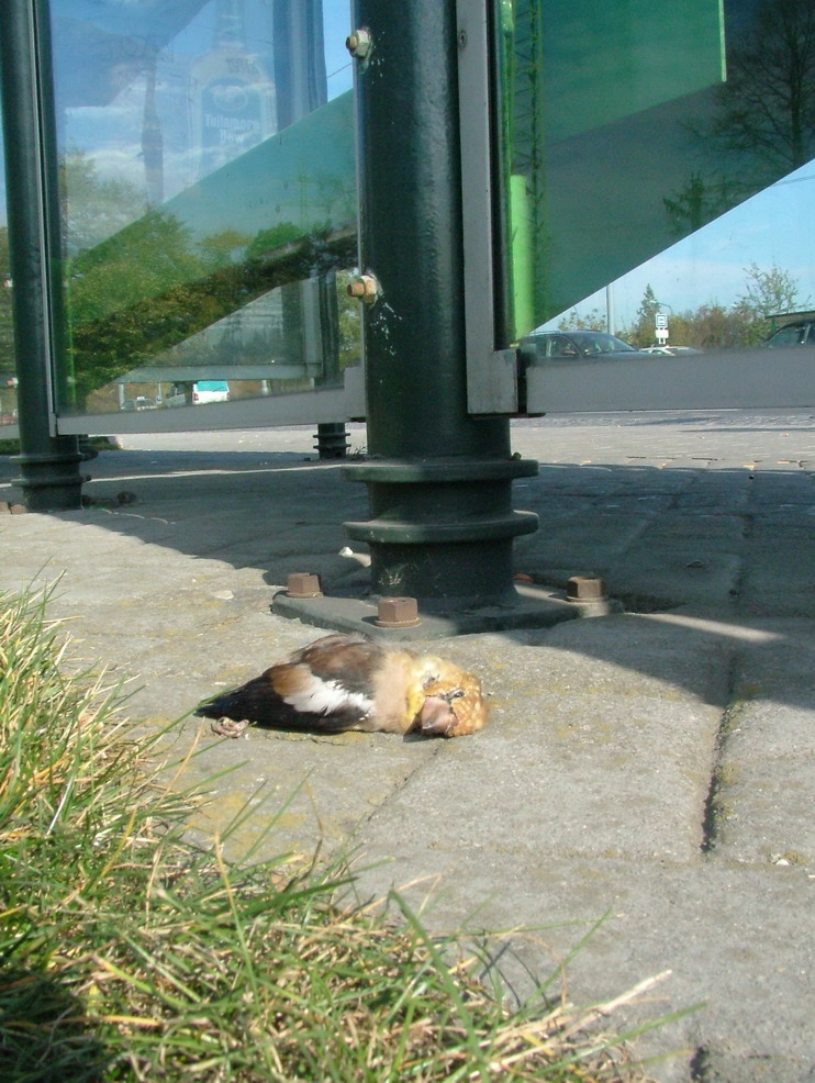 Dead bird next to bus station