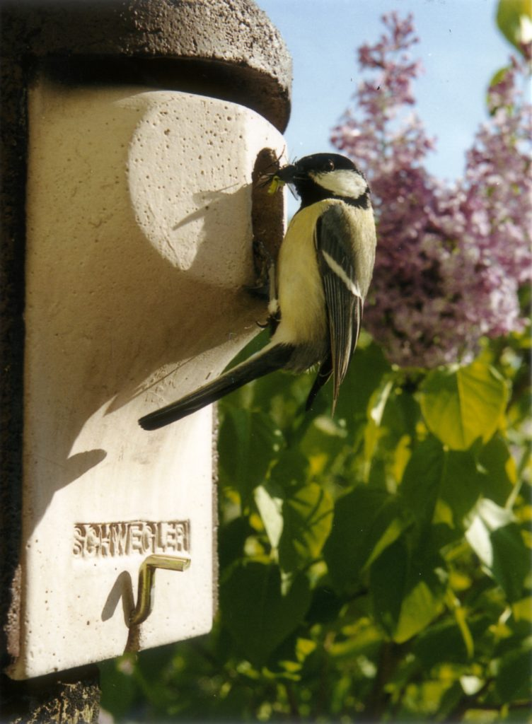 Tit sitting on bird box