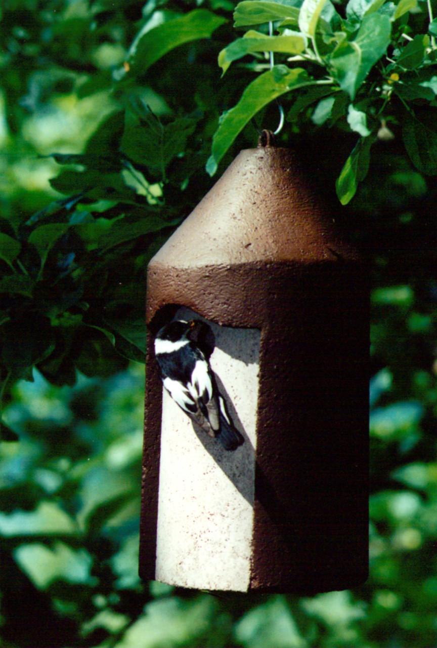 Nesting box by Schwegler
