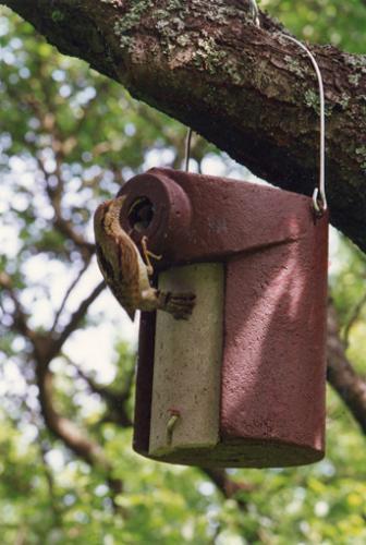 3SV nesting box