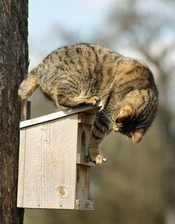 Cat sitting on nesting box