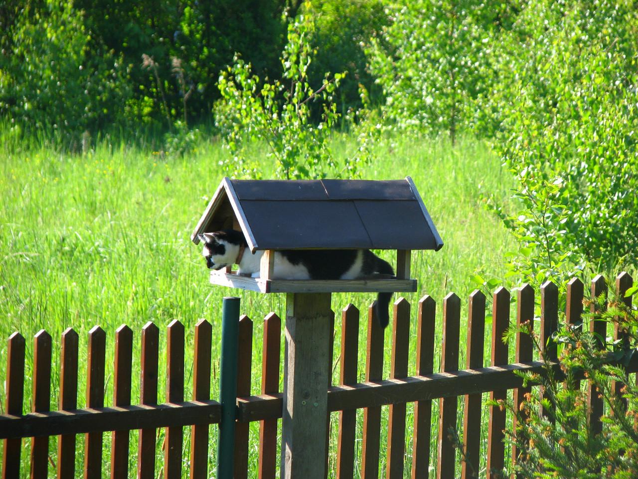 Bird table cat inside