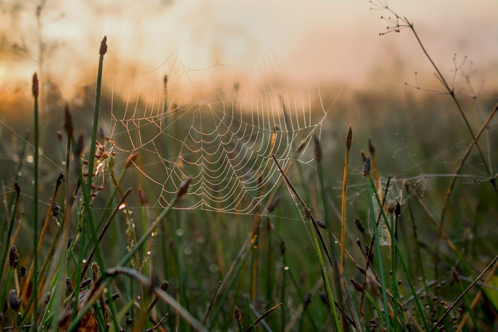 Spinnennetz auf der Wiese